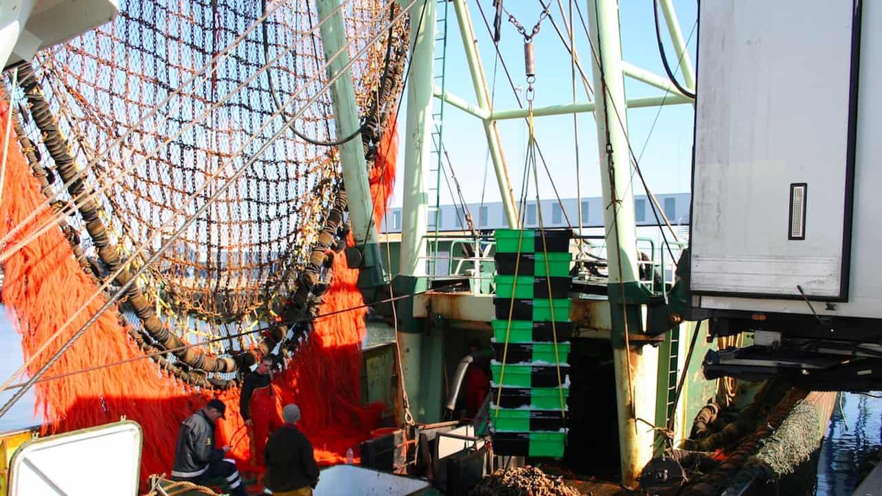 Read more about the article Agreement limits Skagerrak beamer fleet