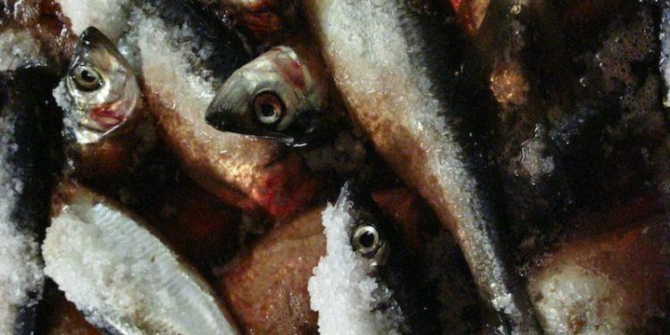 Norway has set its Atlanto-Scandian herring quota for 2019 - @ Fiskerforum