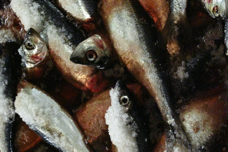 Norway increases its share of herring fishery
