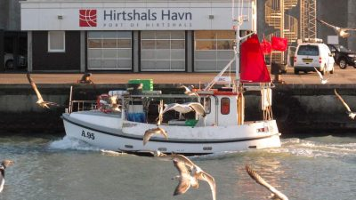 Hirtshals is Denmark's top landing port