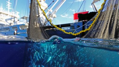 Acoustic innovation could single out target tuna species