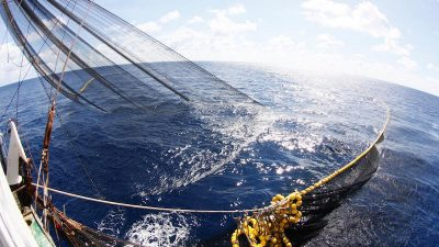 ISSF outlines top asks for Indian Ocean Tuna Commission