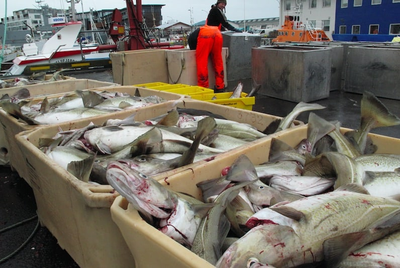 Read more about the article Iceland's small boat federation slams 2016-17 quotas
