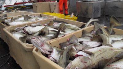 Coastal fishermen slam Ministry quota adjustment