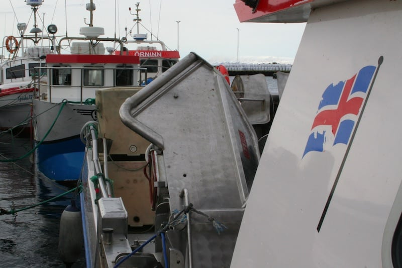 Read more about the article Iceland's Fisheries Ministry allocates 32,000 tonne special purpose quota