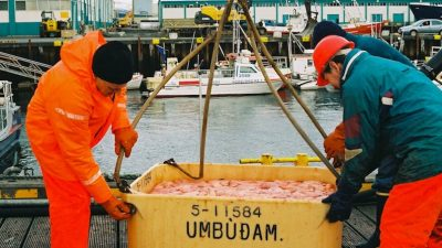 Auditor slams Iceland's Directorate of Fisheries
