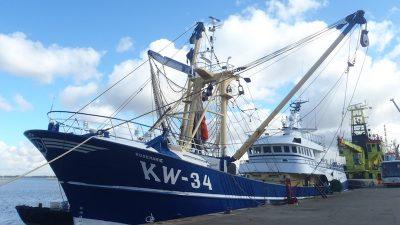 Despite smear campaign, Dutch fishermen believe in pulse trawling