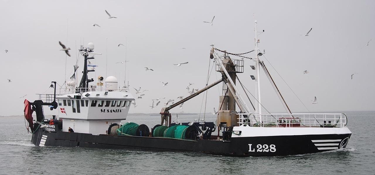 Brisling quota too low, says Hanstholm skipper