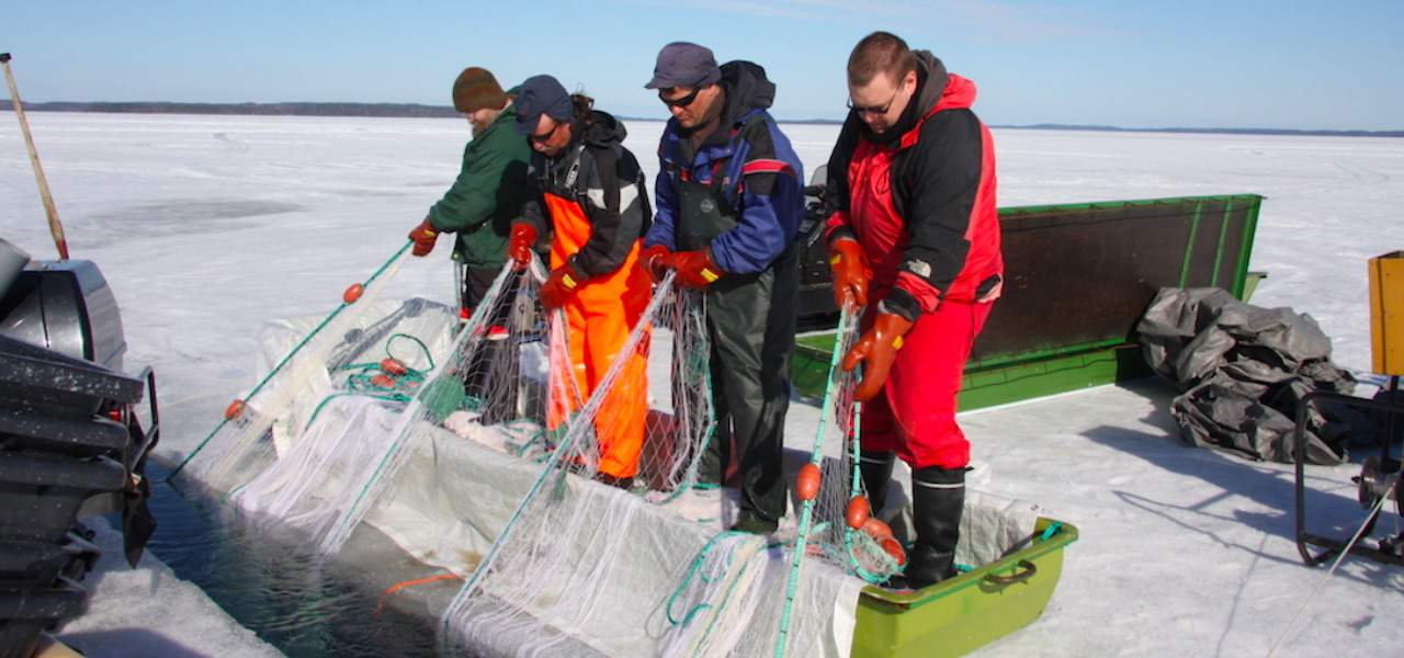 Climate change could end Finland's winter seine fishery