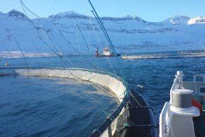 Icelandic Aquaculture