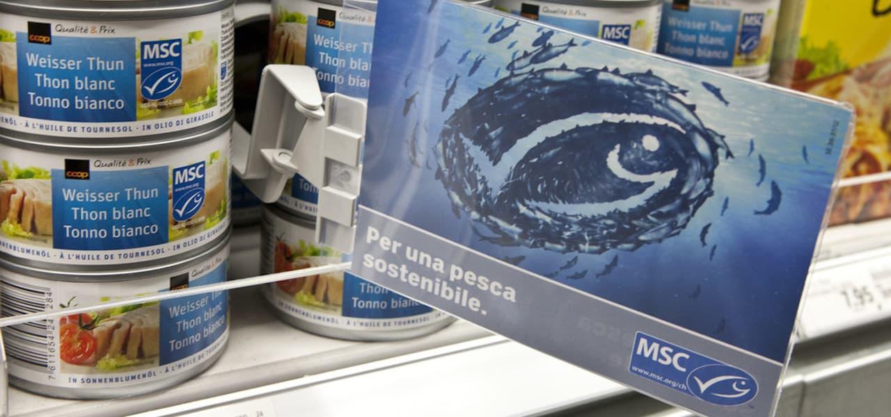 Read more about the article Soaring success for eco-labelled tuna