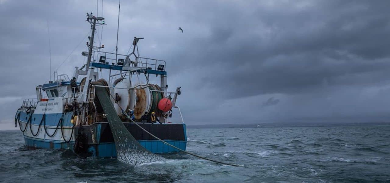MSC recertifies French herring fishery