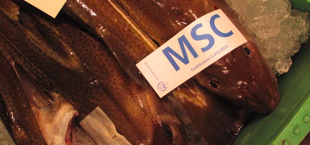 MSC withdraws North Sea cod certification