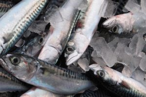 Jens Christian Holst claims that the mackerel stock in the North Atlantic is much larger than ICES and IMR are prepared to admit - @ Fiskerforum