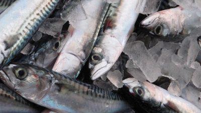 Mackerel claims making waves