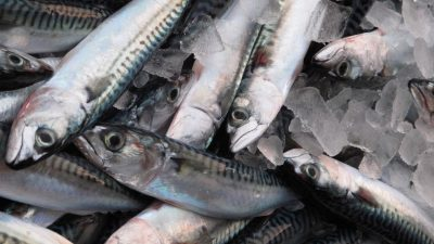 Minister asks MSC to reconsider mackerel suspension