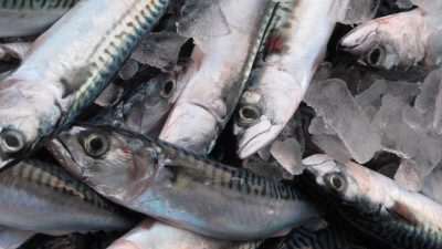 Threat of sanctions against Greenland and Iceland over mackerel policy