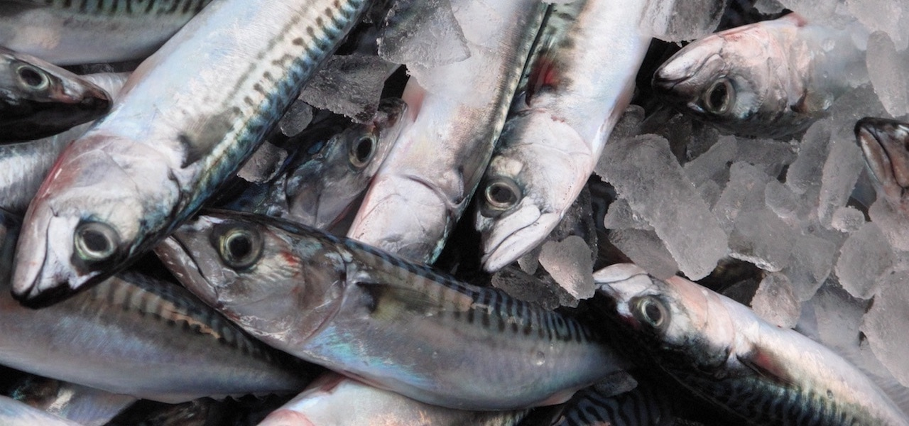 Scottish mackerel group demands action on sustainability