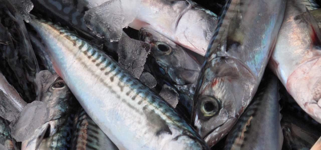 Additional quota for Scottish inshore fishing