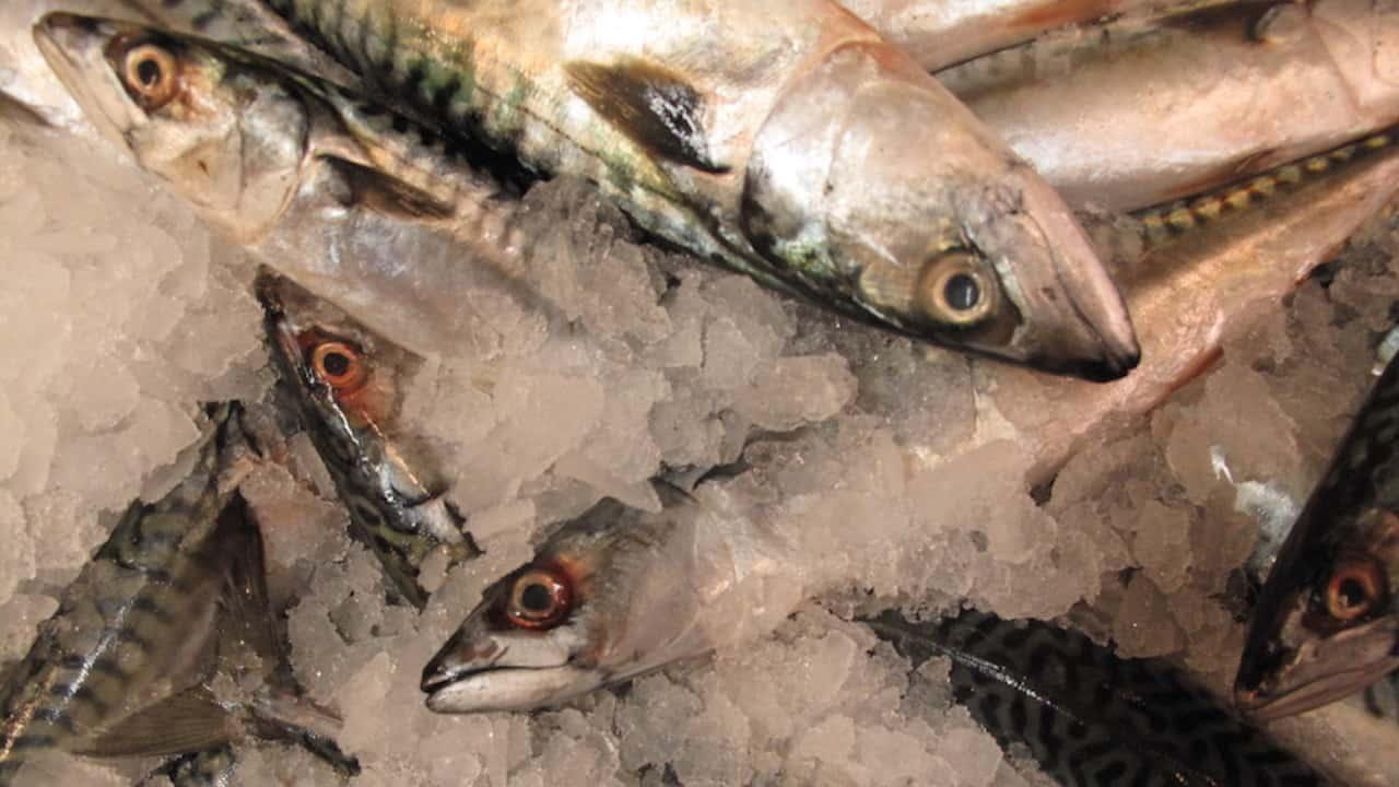 Norway takes a tough line on mackerel
