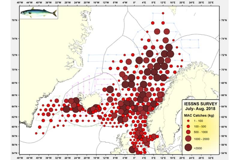 Survey shows mackerel decline
