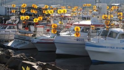 Iceland's coastal fishermen dissatisfied with 4% of mackerel