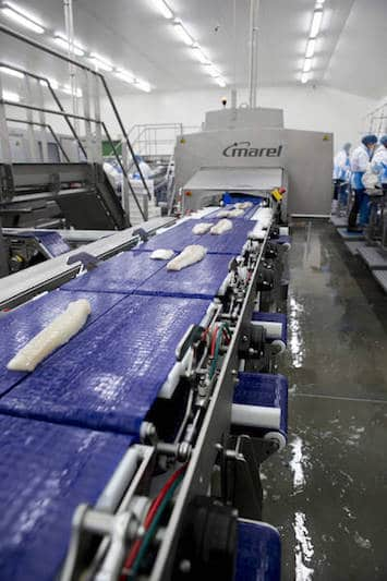 Quality seafood deserves quality processing