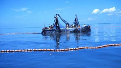 No overfishing on Atlantic menhaden