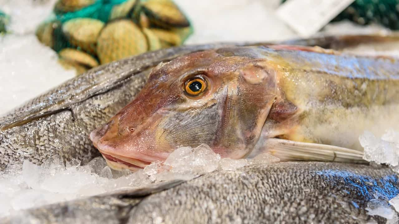 Read more about the article Strong interest in Bremen seafood event