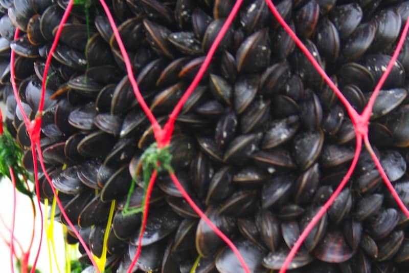 Read more about the article Study focuses on French mussel market