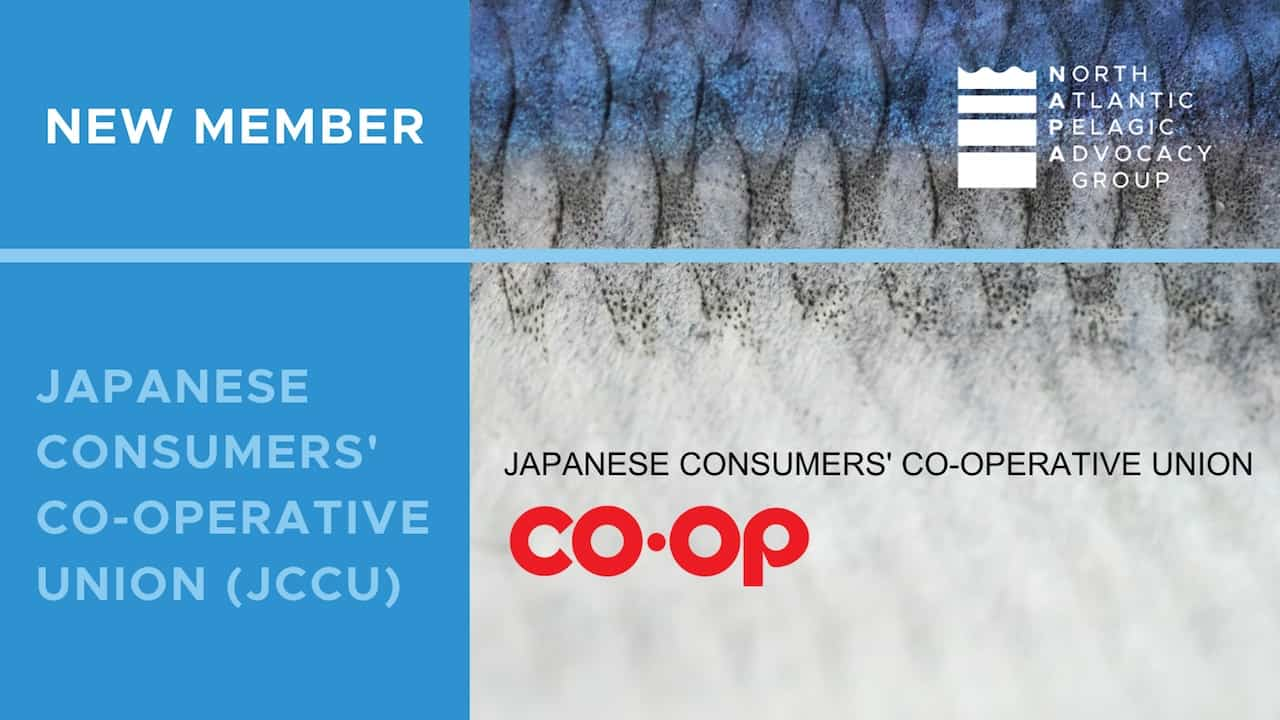 Read more about the article NAPA draws in support from Asian retailer