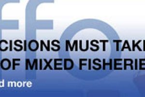 Quota decisions must take greater account of mixed fisheries.  Photo: - @ Fiskerforum