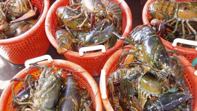 Retain and report American lobsters