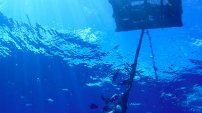 NOAA Fisheries begins Eastern Pacific FAD management