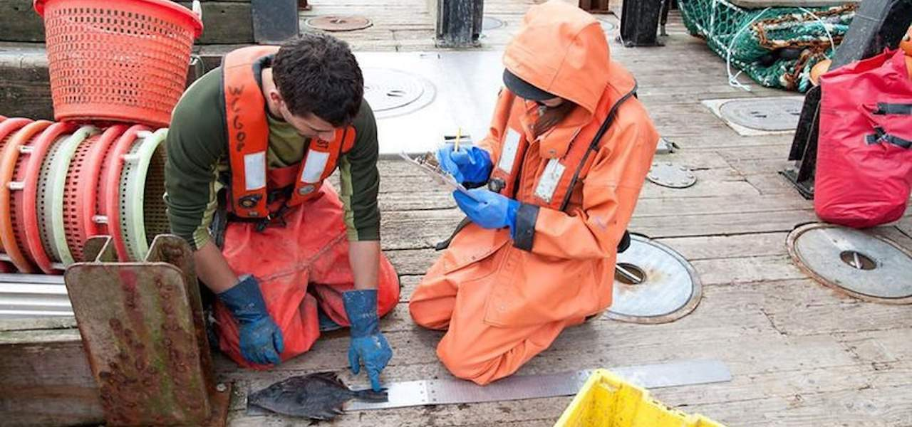 Keeping fishery observers safe from harassment