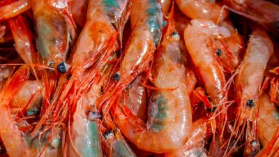 Conflicted Norwegian policy on selective shrimp gear