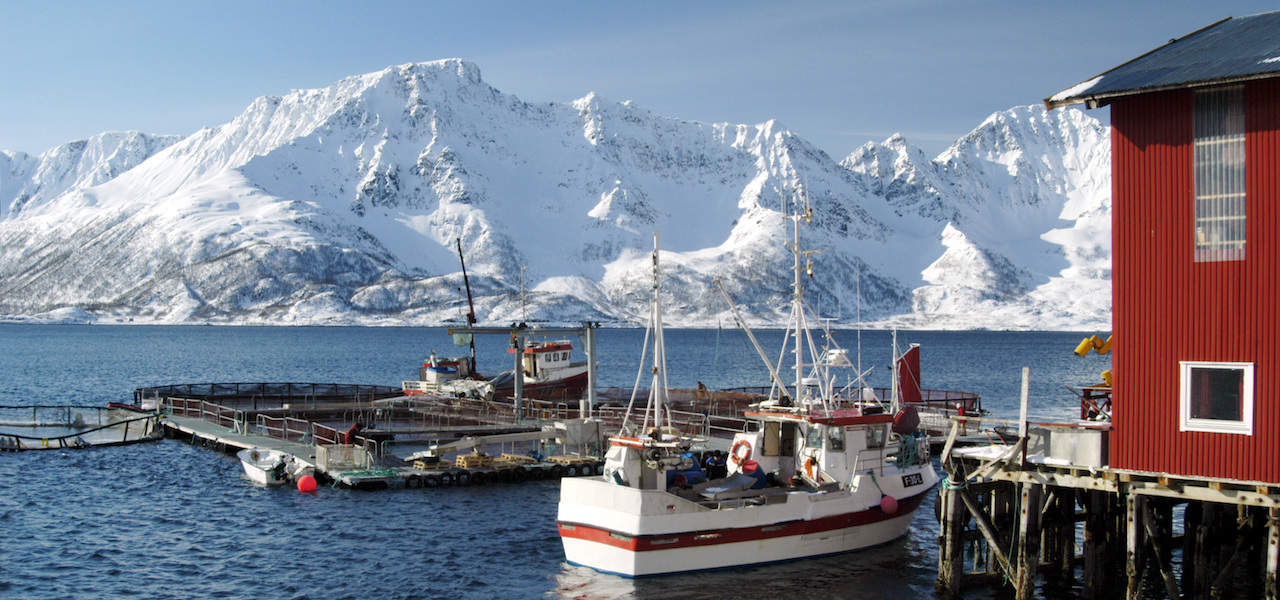 Demand down all round for Norwegian seafood exports
