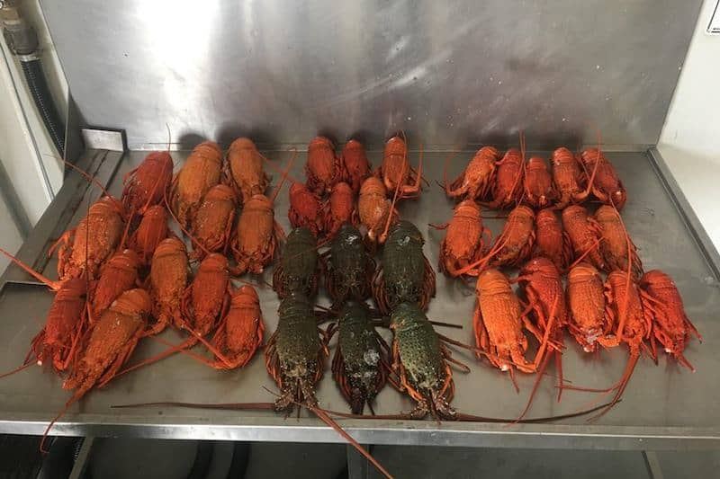 In hot water over poached lobsters