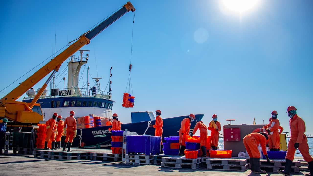 MSC certifies Namibian hake fishery
