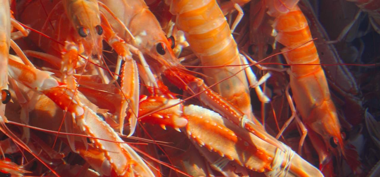 Scotland supports prawn sector