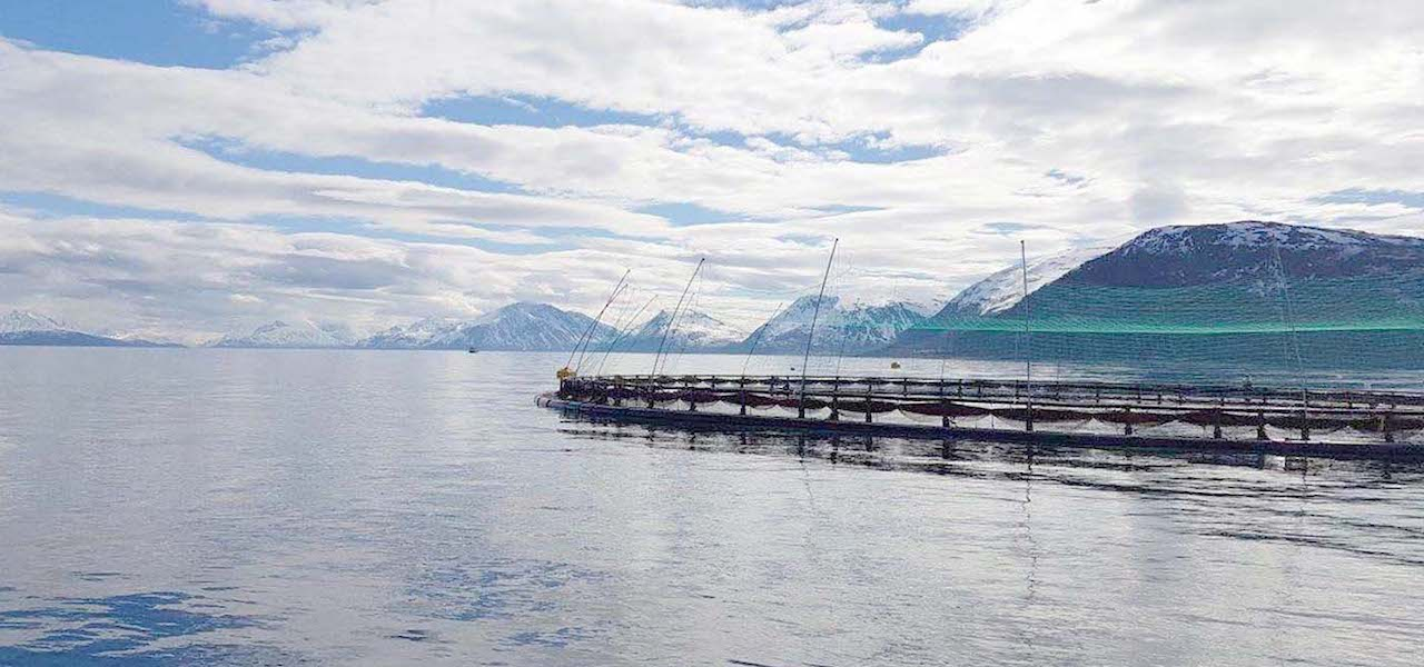 Norcod: Time is right for sustainable cod farming