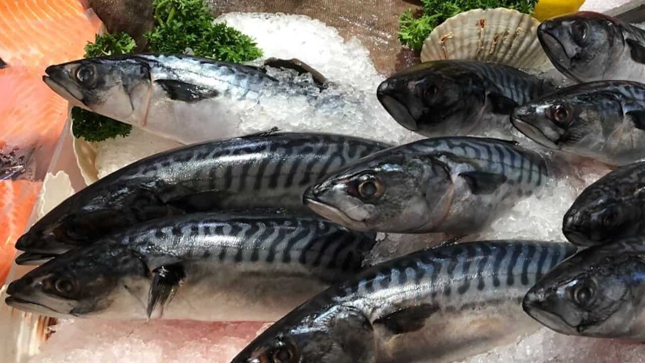 Read more about the article Norwegian fleet's record mackerel catch