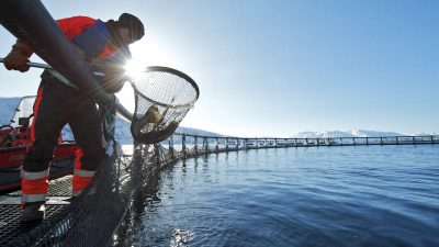 Seafood pivotal for rebuilding Norway's economy