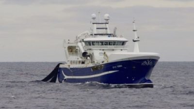 Norwegian fleet fishing well on blue whiting