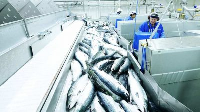 Drive to maintain seafood production and exports
