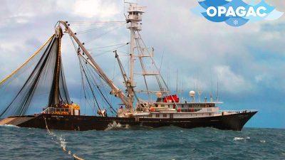 Tuna sustainability and IUU
