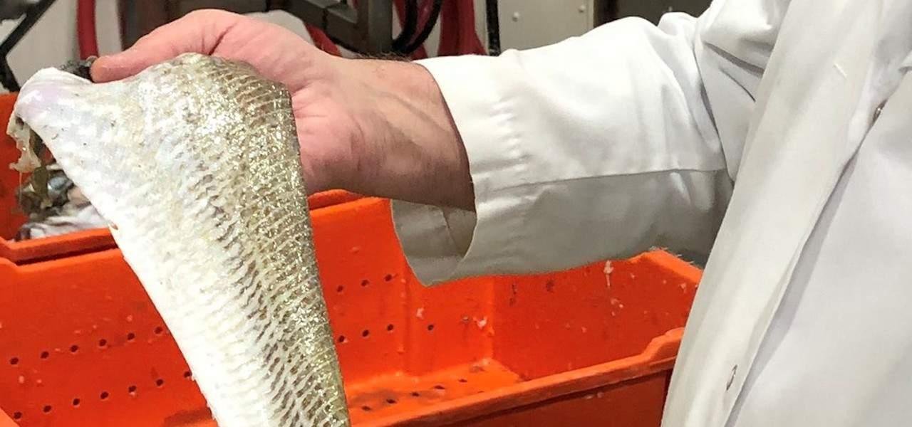 Icewater Seafoods' leadership on reducing food waste