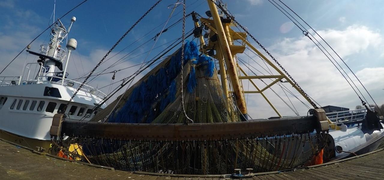 France and Belgium ban pulse fishing