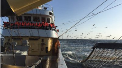 Dutch federations open and transparent on pulse fishing