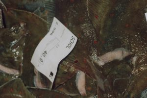 Channel plaice quotas have been more than doubled - @ Fiskerforum